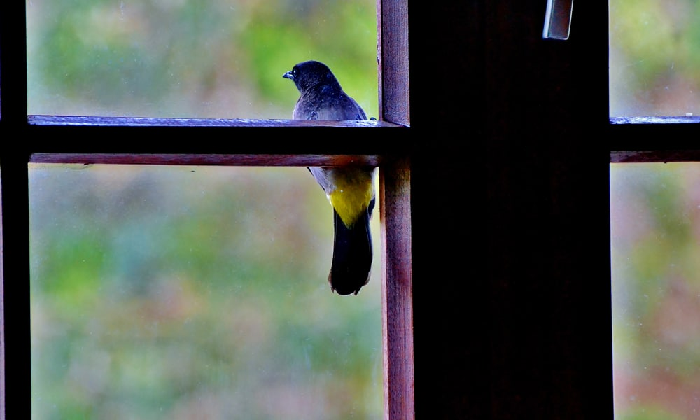 blue and yellow bird sitting on ledge outside window