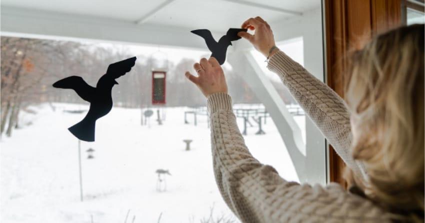 woman placing black bird decals onto a window